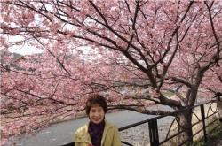 桜が満開の河津温泉
