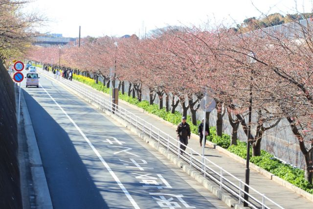 桜のシーズン